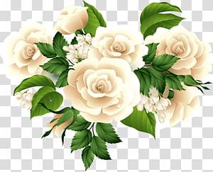 roses bouquet PNG clipart
