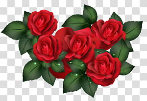 Rose , red rose PNG clipart