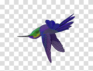 Hummingbird M Parrot Beak Feather, parrot PNG