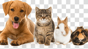 Cat Dog Guinea pig Kitten Pet, exotic pets list PNG