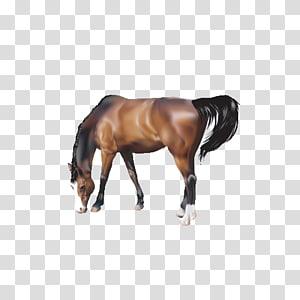Horse , Grazing horses PNG