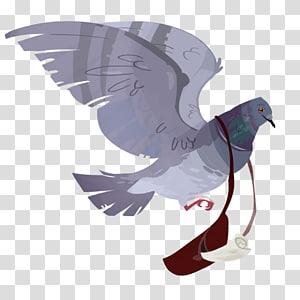English Carrier pigeon Homing pigeon Columbidae Bird King pigeon, pigeon PNG