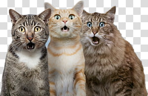 Cat Dog Pet, Surprised cat, three cats illustration PNG