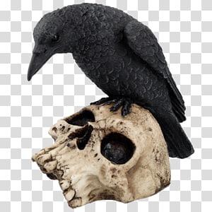 Bird The Raven Skull Common raven Crow family, Bird PNG clipart