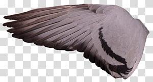 Columbidae Racing Homer Bird Wing Feral pigeon, pigeon PNG