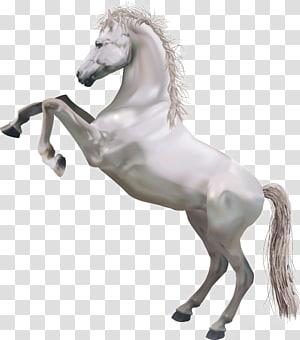 Horse Perseus Pegasus Illustration, Whitehorse PNG