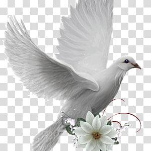 Colombe Bird Doves as symbols, Bird PNG