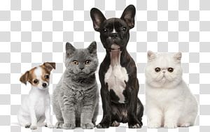 Dog Cat Puppy Kitten Pet, Dog PNG clipart