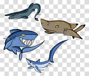Shark Marine mammal Dolphin Chondrichthyes Fish, shark cartoon PNG clipart