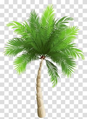 green coconut tree art, Coconut Arecaceae Phoenix canariensis , palm tree PNG clipart