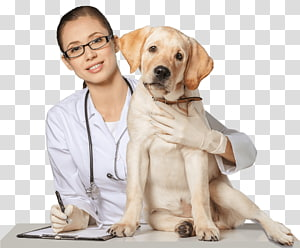 Dog Pet sitting Cat Veterinarian, Dog PNG