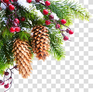 Christmas tree New Year tree , christmas PNG clipart