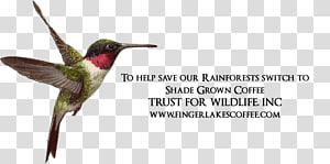 Ruby-throated hummingbird Advertising Fauna Beak, coffee beans shading PNG
