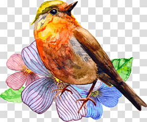 Watercolor painting Bird Art, painting PNG