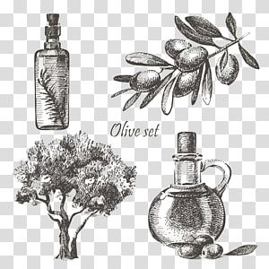 hand-painted olive oil PNG clipart