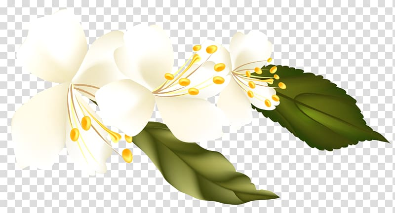 white petaled flower, , Spring Branch Element PNG clipart