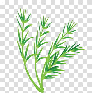 Leaf vegetable Leaf vegetable, Vegetable Leaves PNG