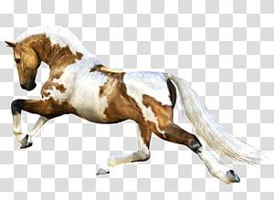 Horse Stallion , Horse PNG