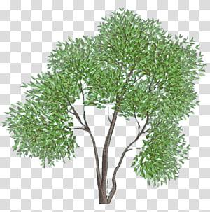 treelet , boar PNG clipart