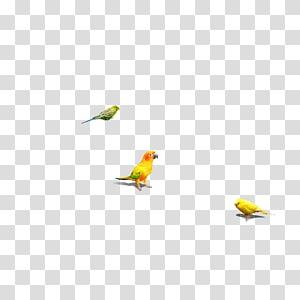 Bird Parrot, bird PNG clipart