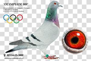 Columbidae Homing pigeon Racing Homer Pigeon racing Pigeon keeping, racing pigeon PNG clipart