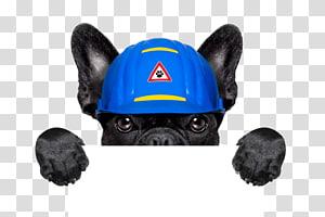 Golden Retriever Puppy Dog Daze Industrial Handyman, Creative puppy holding signs PNG