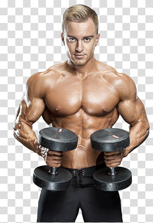 Dumbbell Physical exercise Bodybuilding Muscle Barbell, muscle PNG