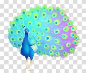 Feather Galliformes Beak, feather PNG
