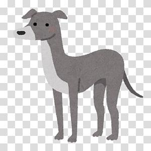 Italian Greyhound Whippet Spanish greyhound Sloughi, others PNG