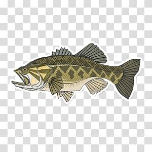 Largemouth bass Smallmouth bass Bass fishing, Fishing PNG clipart