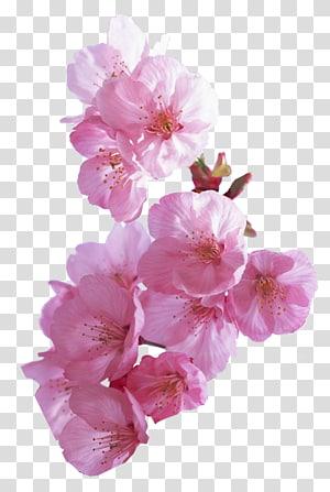 Flower garden Flower garden , flower PNG clipart