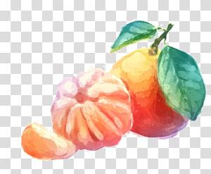 Mandarin orange Tangerine Drawing, orange PNG clipart