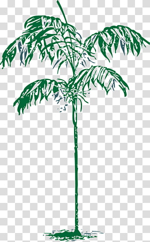 Arecaceae Tree Drawing , palm trees PNG clipart