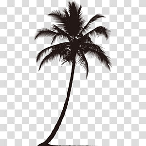 coconut trees silhouette PNG