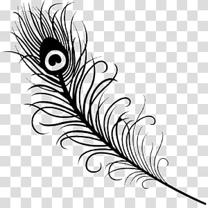 Feather Peafowl Drawing , peacock flower PNG