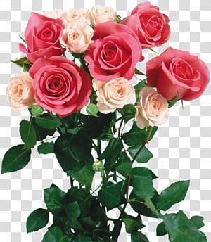 Garden roses Flower bouquet , bouquet of flowers PNG clipart