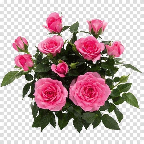 Garden roses Cabbage rose Floribunda Floral design Cut flowers, flower PNG