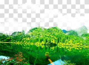 2017 Jiuzhaigou earthquake Huanglong Waterfall National park, Jiuzhaigou Lake Forest Background PNG clipart