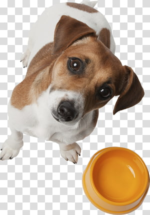 Dog breed Puppy Harrier Beagle Drever, puppy PNG