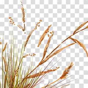 brown grass illustration, Painted reed grass PNG clipart