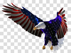 Flag of the United States Independence Day Bald eagle, united states PNG clipart
