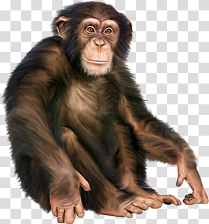 hand-painted chimp PNG