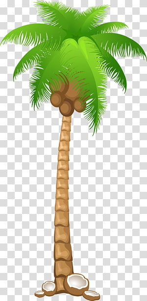 Arecaceae Tree , palms PNG clipart