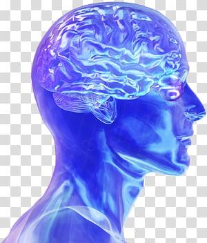 Blue Brain Project Human brain Neuroscience Electrical brain stimulation, Brain PNG