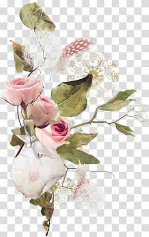 Garden roses Centifolia roses Flower bouquet, flower PNG clipart