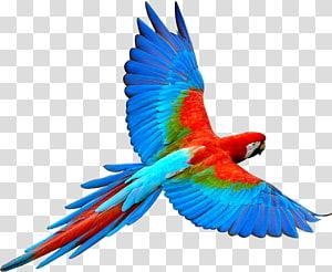 scarlet macaw , Parrot Bird Flight Scarlet macaw, parrot,Bako PNG clipart