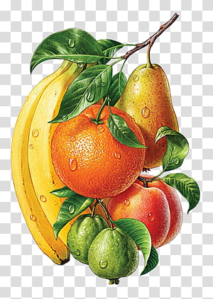 Drawing painting Illustrator, painting PNG
