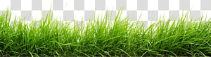 Computer Icons , grass PNG
