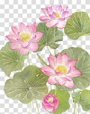 pink petaled flower illustration, Watercolor lotus PNG clipart