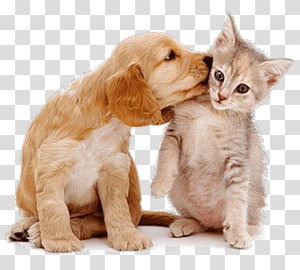 Dog–cat relationship Dog–cat relationship Pet sitting, Cat PNG clipart
